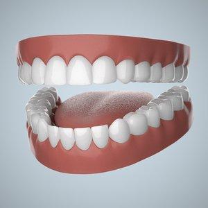 3d human jaws teeth gums model