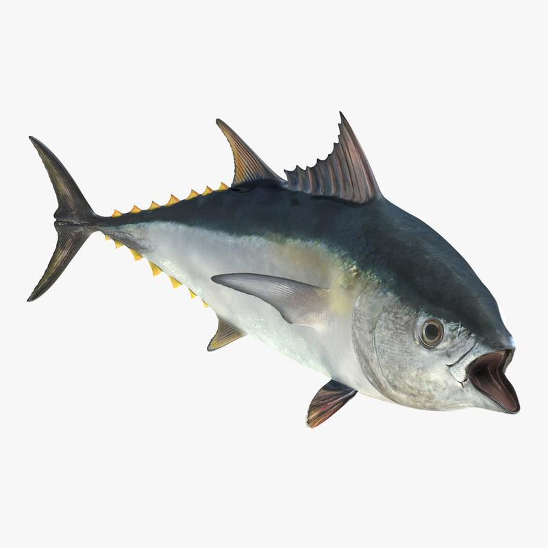 tuna fish rigged 3d model