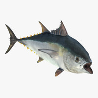 tuna fish rigged 3d model