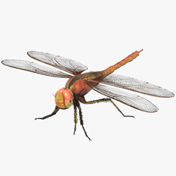 3d model rigged dragonfly