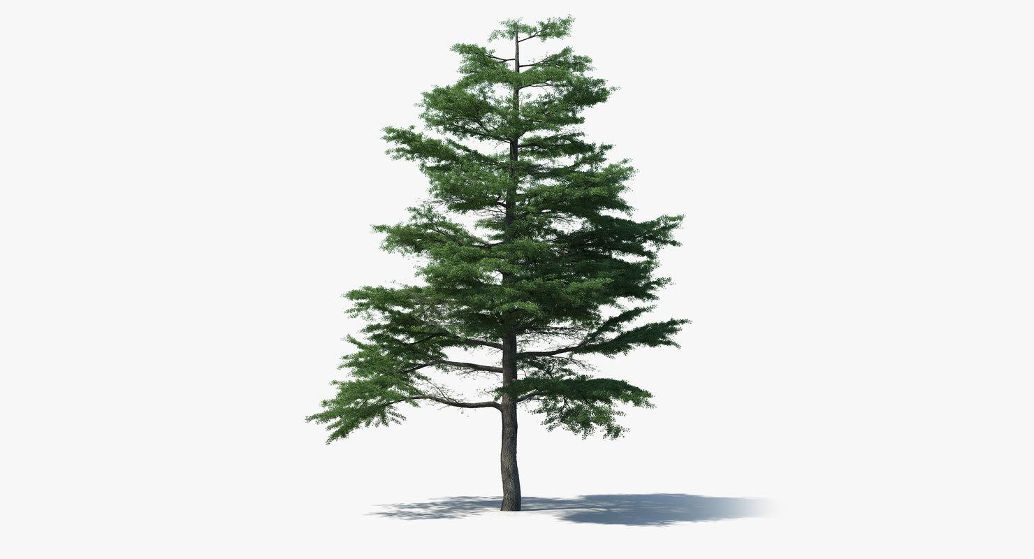 3d scan pine tree