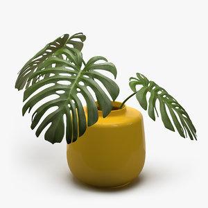 monstera plant 3d model