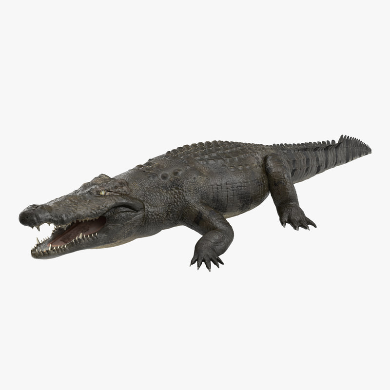 large nile crocodile 3d model