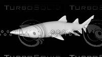3d model animal shark