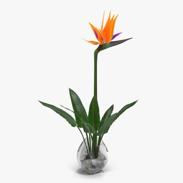 3d bird paradise glass vase model