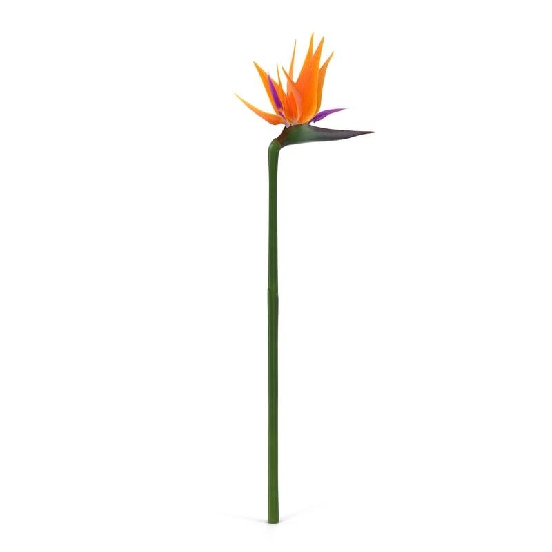 3d bird paradise flower 2