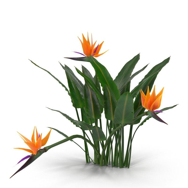 3d model bird paradise plant