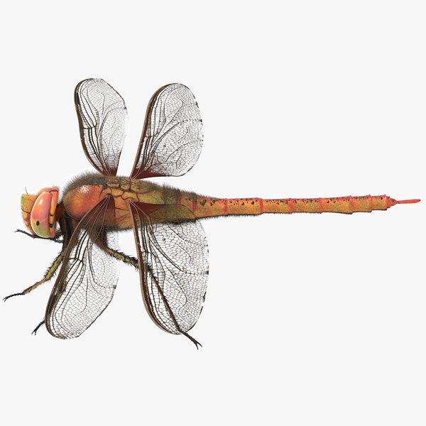 dragonfly arnold obj