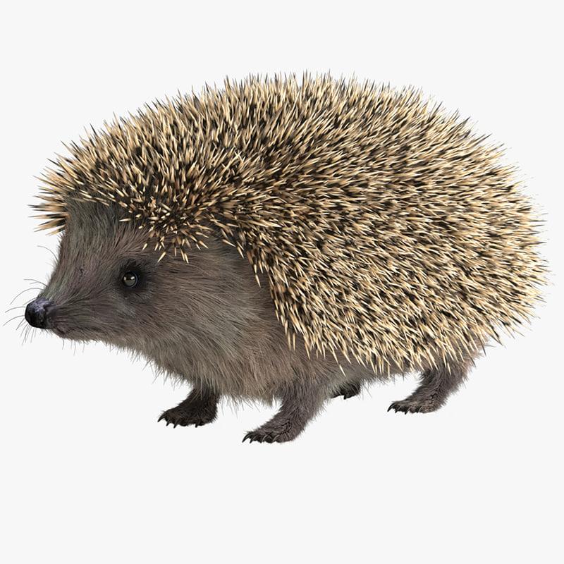 max hedgehog