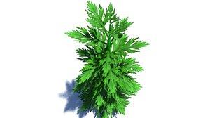 plant herb 3d model