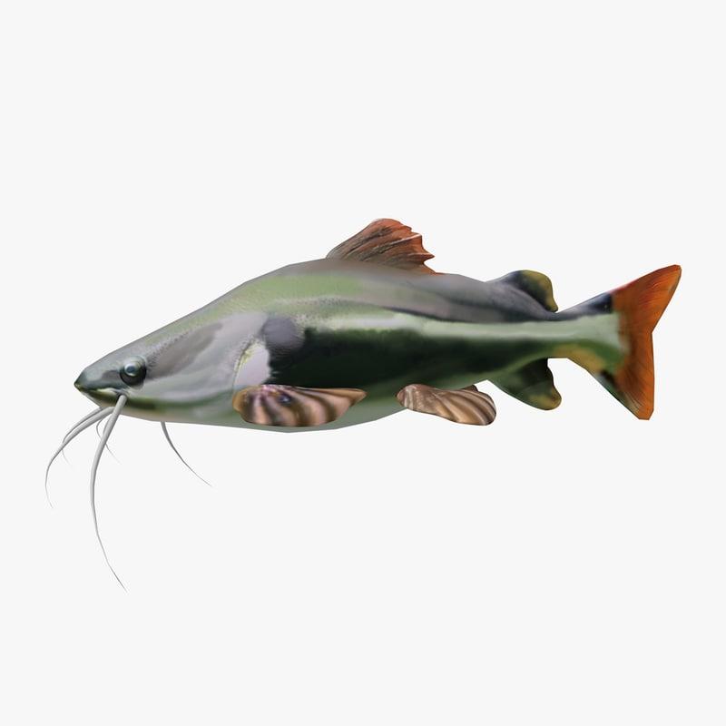 swimming red tail catfish c4d