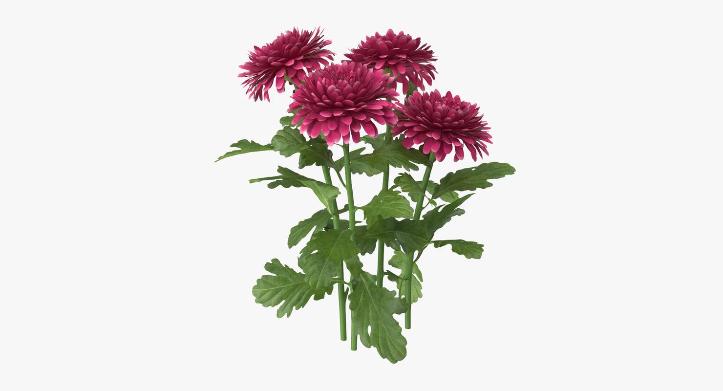 3d pink chrysanthemum natural group