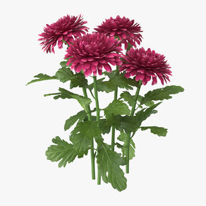 3d pink chrysanthemum natural group