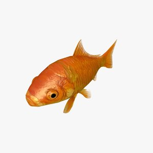 c4d common goldfish animation