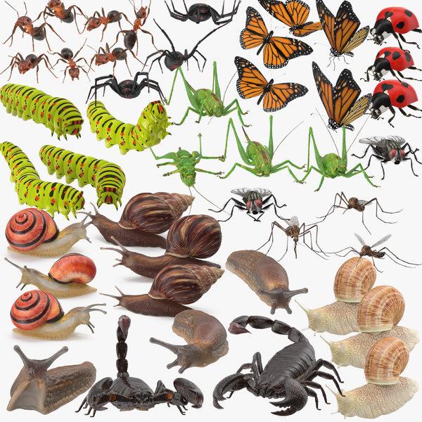 arthropods mollusks max