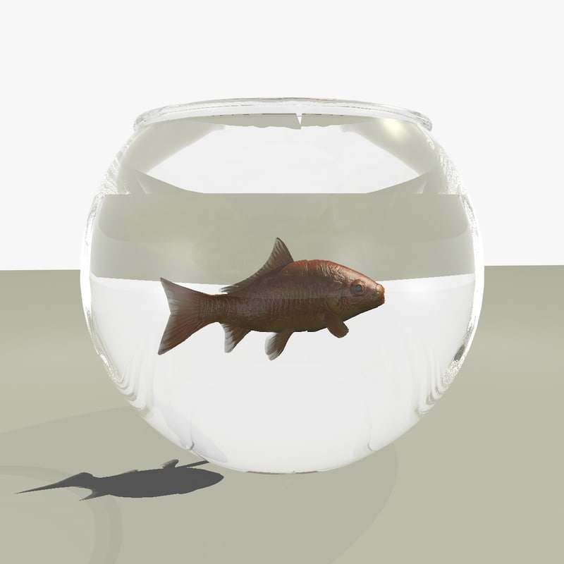 common goldfish fish bowl 3d c4d