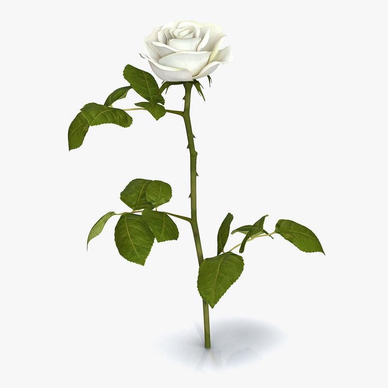 rose 3 white 3ds