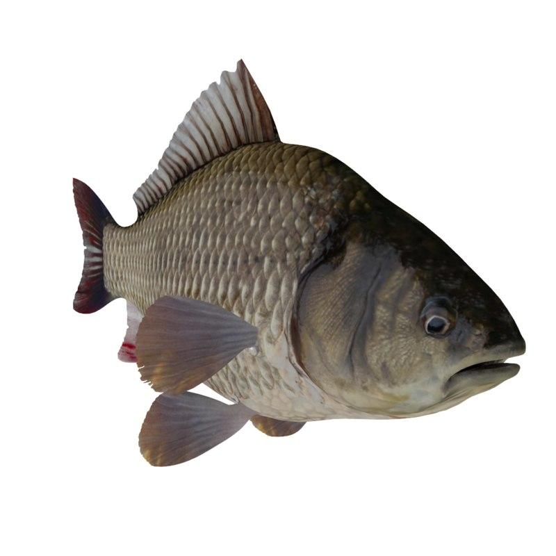 3d model fish crucian
