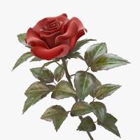 red rose max