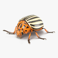 Colorado Potato Beetle with Fur 3D Model