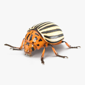 3d colorado potato beetle fur model