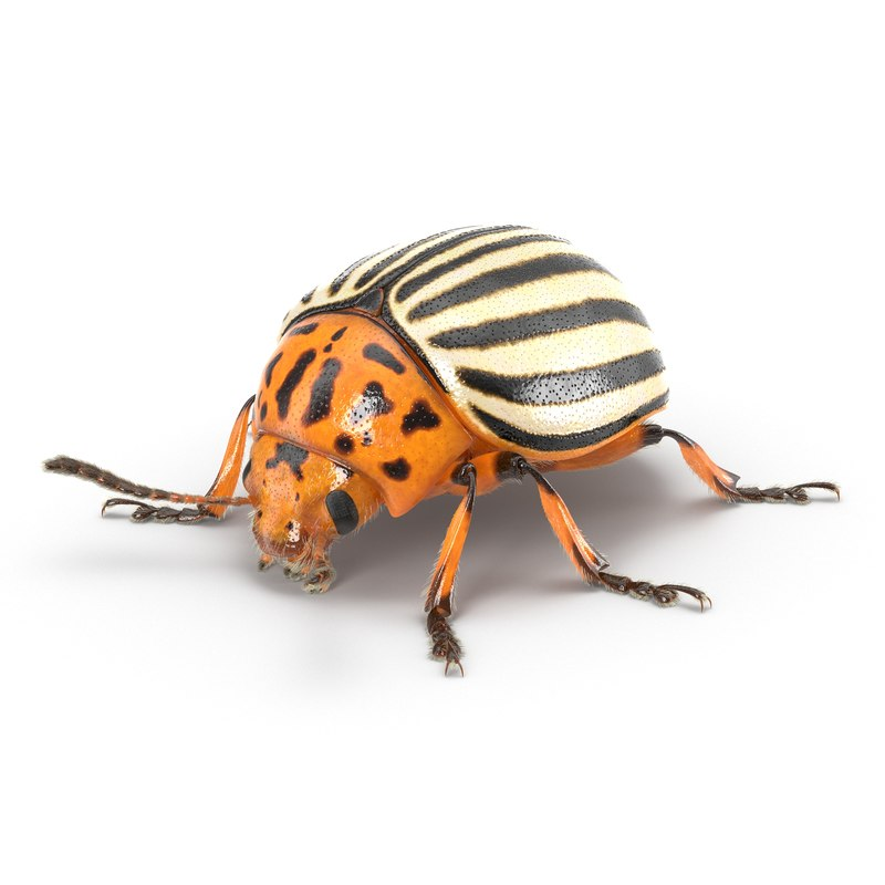 3d colorado potato beetle fur model
