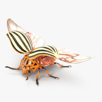 colorado potato beetle 2 3d max