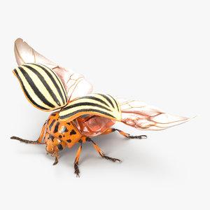 colorado potato beetle 2 3d max
