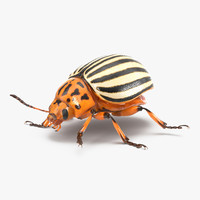 3d colorado potato beetle rigged