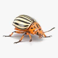 Colorado Potato Beetle with Fur Rigged 3D Model