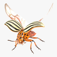 colorado potato beetle 2 3d model