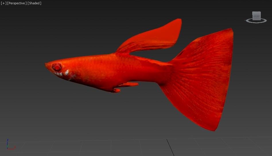 rig guppy fish 3d model
