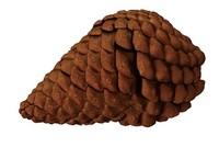 3ds realistic pinecone cone