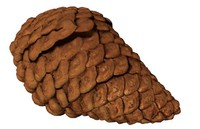 fir cone pinecone 3d 3ds