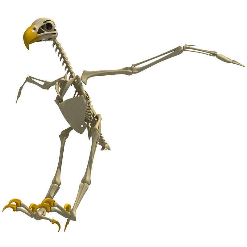 max bald eagle skeleton