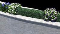 bush wall plant