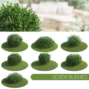 seven bush max