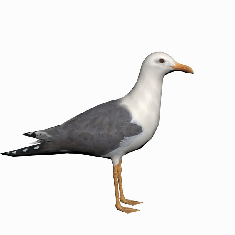 3d seagull realtime model