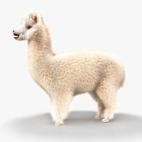 obj alpaca