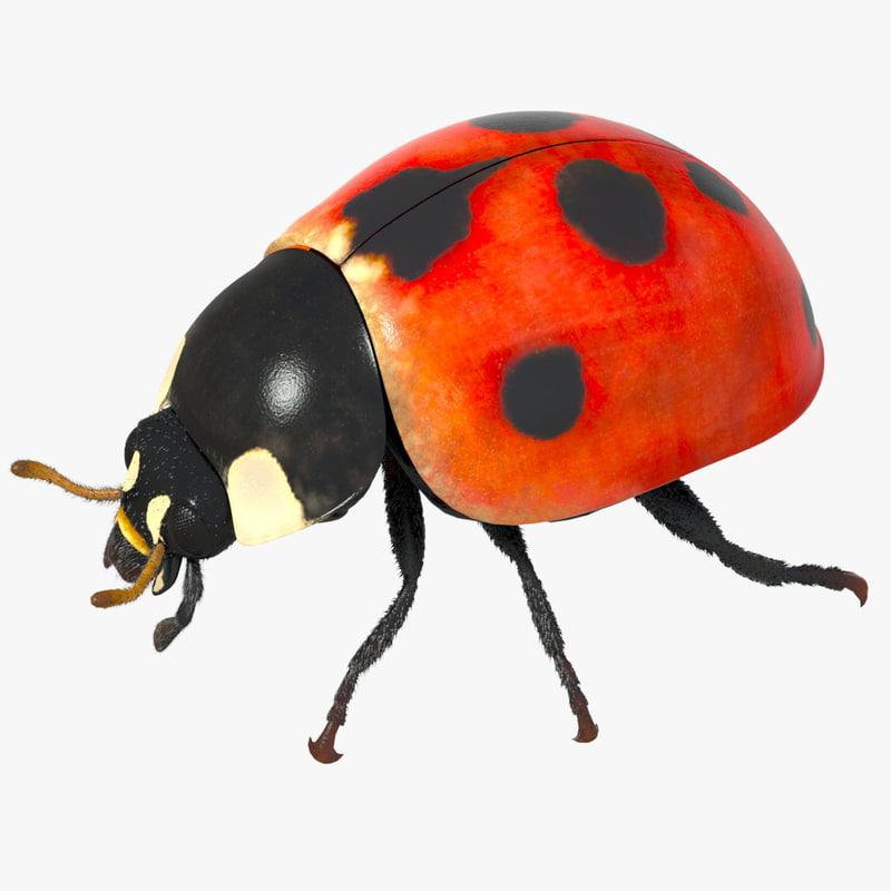 3d rigged ladybug model