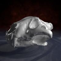 3d obj bengal tiger skull