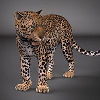 leopard rig ma free