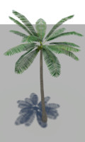 coconut palm tree 3ds