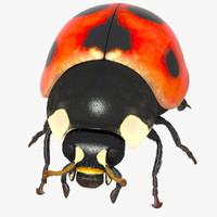 3d ladybug fur shave