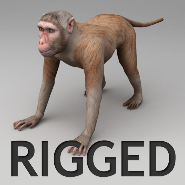 3d model rhesus macaque rigged biped