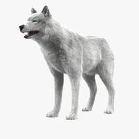 3d model wolf white