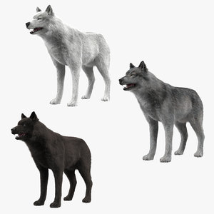 3d wolf colletion model