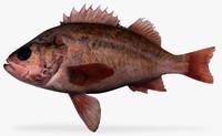 vermillion rockfish 3d x