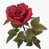 3d rose red v 2 model