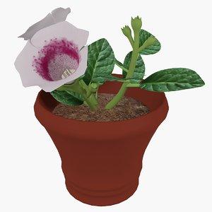 3d model flower pot gloxinia
